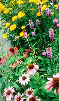 big bright blooms
