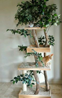 Now thats a cat tree!