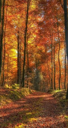 forests, tree, fall forest, path, beauti, autumn color, the road, mother nature, favorit season