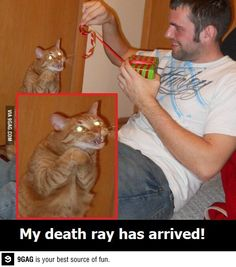 That cat is terrifying
