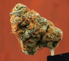 A Marijuana Nug