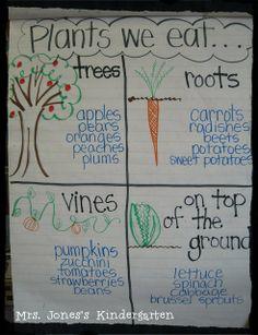 Plants We Eat, Mrs. Jones's Kindergarten