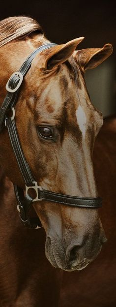 Beautiful Chestnut Horse With A White Star On Her Forhead