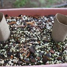 Use empty toilet paper rolls around your young vegetables to protect them from cutworms.