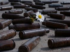 Daisy growing out of an empty bullet by Markus Gebauer, via 500px