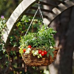 Cultivar tomates o fresas en cestas colgantes  //  Why not grow tomatoes in hanging baskets? See 14 more fun ideas for growing tomatoes: http://www.bhg.com/gardening/vegetable/fruit/garden-tomatoes-fun-ideas/?socsrc=bhgpin041313hangingtomatoes