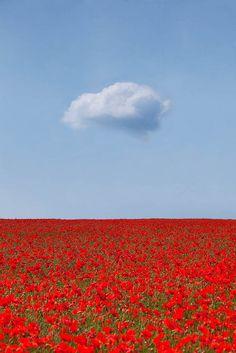Poppy Fields, England