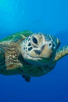Sea turtle ready for close-up