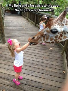 hand, little girls, anim, funny pictures, the zoo, funni, giraff, finger, kid