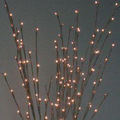 Willow Branch Light