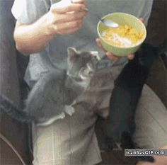 funny-gif-cat-cereal  Story of my Life!! Lmbo