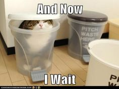 Google Image Result for http://www.fbclick.com/wp-content/plugins/wp-o-matic/cache/426b1_funny-pictures-lolcats-maru-the-ninja.jpg