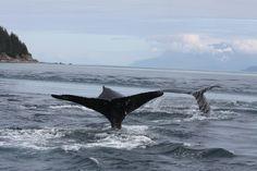 Alaskan Greg Brown recommends Juneau as an ideal destination for adventurers seeking thrills kayaking, hiking, and whale watching.