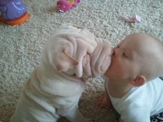 baby kissing a shar pei. aww