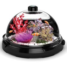 The Tabletop Saltwater Aquarium. This 3 gal tank has a neat feature to where you don't even have to remove the fish or water to clean the dome. - I WANT ONE! Oh, wait... My life is crazy enough as is. No more things to keep alive for now... But this is really cool!