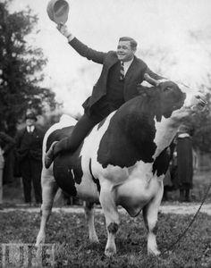 Babe Ruth riding a cow