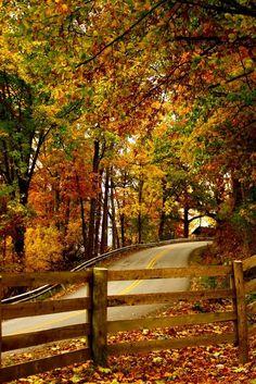 Autumn Road, Lexington, Kentucky