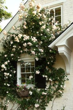 I want to live in the upstairs bedroom in this picture! The bedroom where the scent of those beautiful roses wafts in on the breeze.  Unless, of course, there's a lilac on the other side of the house.