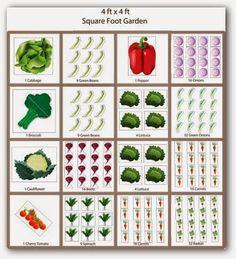 Back to the Basics!: Basics of Square Foot Gardening