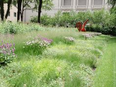 Roy Diblik, co-owner of Northwind Perennial Farm in Burlington, WI designed this garden for the Art Institute of Chicago. Photo by Roy Diblik