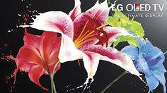 LG OLED is now at Best Buy! #HintingSeason