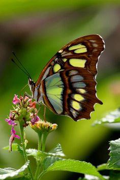 beauty natur, beauti butterfli, butterfli ii, beauti natur, butterflies, ladybug butterfli, butterfli moth, pretti, beauti thing