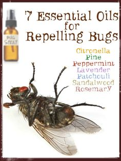 Homemade Natural Bug Repellent / http://www.cheeseslave.com/top-7-essential-oils-for-repelling-bugs-from-natural-homestead/