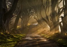 The Dark Hedges...in Ireland.