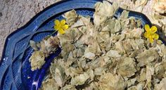 Hops Flowers--promotes sleep (combines well with valerian and skullcap), increases flow of bile, increases circulation and heart action, decreases desire for alcohol, reduces high fevers, reduces pain and inflammation, excellent for the nerves and as a sleep aid.