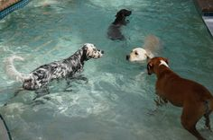 Pool Party at the new DPC in Florida!