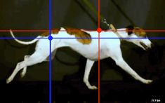 gallop, motion capture, dog, animation, 3d, running, run cycle, nature, gif