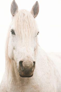 A White Horse. So pure. So calm. So beautiful. Just like Lacee.