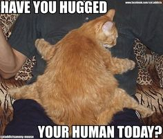 please hug your human they really need it