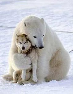 Bear Hug! sled dogs, animals, polar bears, pet, cold lunches, friendship, bear hugs, homes, full movies
