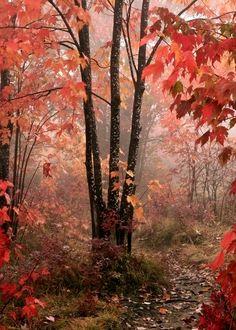 ✯ Beautiful Autumn
