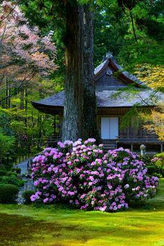 Ohara Sanzen-in temple ~ Kyoto, Japan