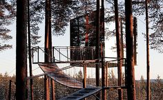 tree hotel!!