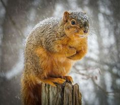 Pearl the Squirrel by Patrick Lombardi on 500px