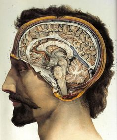 Cross-section of the head showing brain and cerebellum, by Jean-Baptiste Marc Bourgery, from: Traité complet de l'anatomie de l'homme, Paris 1831-1854 by J.M. Bourgery and N.H. Jacob