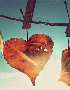 #love #leaves