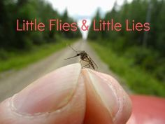 """Don't you HATE mosquito bites?! D. Kelly Ogden has a great lesson to learn about what to stand up against, even if its the {littlest} """"sinsect."""""""