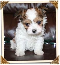 Zoe as a puppy...