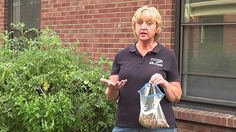 This video is production of Hamilton County Soil and Water Conservation District. The video highlights the use of cover crops in home gardens. The video presents the different steps involved in planting fall cover crop.