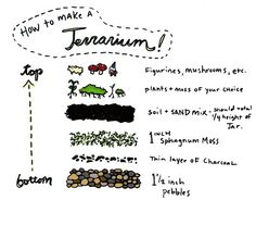 How to build a terrarium | http://www.flickr.com/photos/glittercrisis/4258041150/