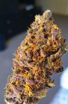 Purple mango kush