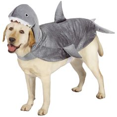 Casual Canine Shark Costume - Large | EntirelyPets