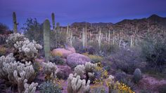 near Saguaro National Park East outside Tucson.