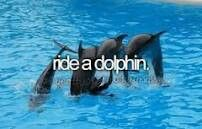 Ride a dolphin. # Bucket List # Before i die