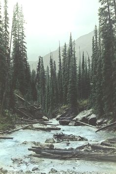 nation park, yoho nation, camera, peaceful places, national parks, the great outdoors, forest, art print, river
