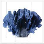 blue porcelain coral